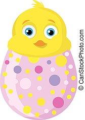 pulcino, uovo