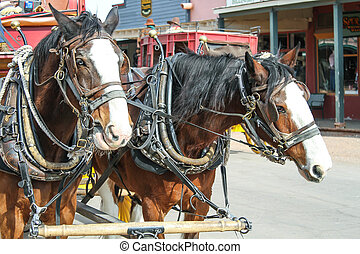 pull team - two draft horses pulling a stage coach