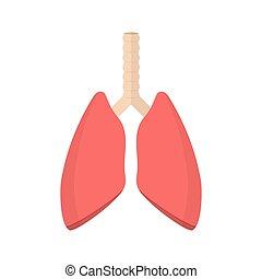 pulmonary system, human lungs.