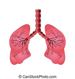 pulmonary system isolated icon