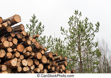 Pulpwood heap in a forest