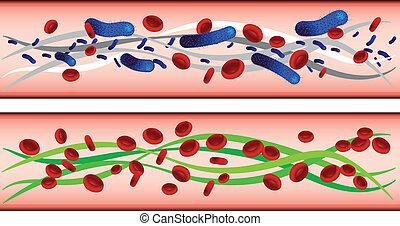 pulsåder, celler, blod, röd, bakterie