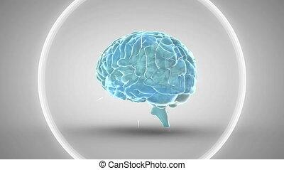 pulsatin, tourner, bleu, blanc, humain, incandescent, triangles, cercles, animation, cerveau, 3d, multiple