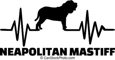 pulsation, mot, neapolitan, mastiff