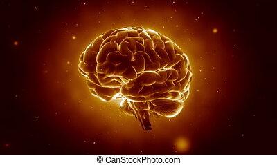Pulsing human brain