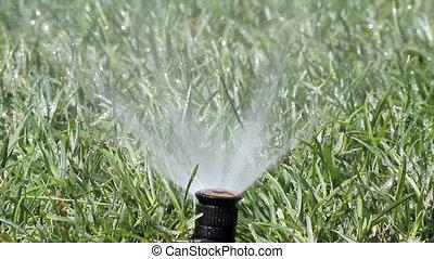 pulvérisation, irrigation, jardin