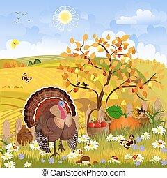 pulyka, ősz, sce, napos, day., thanksgiving., vidéki, bájos, boldog
