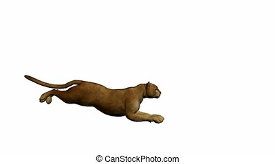 Puma Running - Puma running on a white background