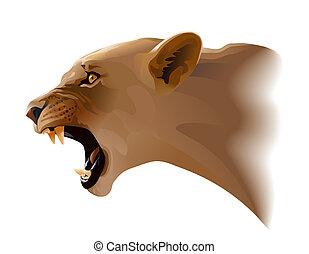 Puma - Head puma cat illustration