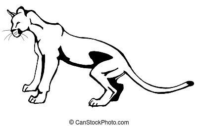 Puma - ink drawing of a yearling puma