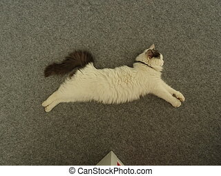 Puma White Kitten