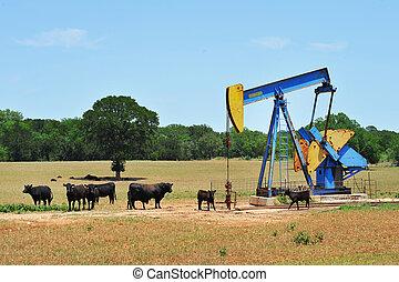 pumper, cattle., puits de pétrole
