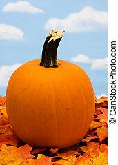 Pumpkin - A pumpkin sitting on fall leaves on a sky ...