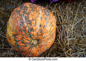 pumpkin against the background of hay. autumn harvest.