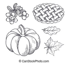 Pumpkin and Baked Pie Cranberry Sketches Vector