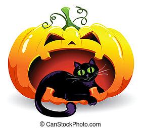 Pumpkin and cat.