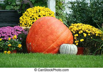Pumpkin and mums