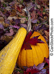 Pumpkin and squash autumn
