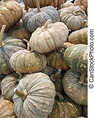 pumpkin at outdoor farmers market