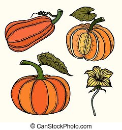 Pumpkin autumn collection. Ripe whole pumpkins, pieces,...