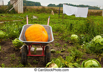 pumpkin carriage in the garden
