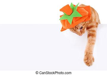 Pumpkin Cat Sign