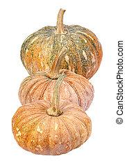 Pumpkin - Cucurbita moschata Decne. - isolated