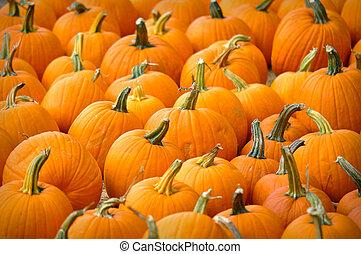 Pumpkin Day 3
