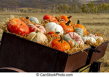 Pumpkin display in old farm equipment on ranch road - Close ...