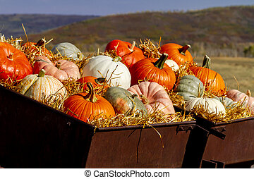Pumpkin display in old farm equipment on ranch road - ...