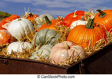 Pumpkin display in old farm equipment on ranch road - Old ...