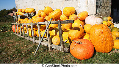 pumpkin farmyard
