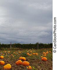 Pumpkin field sky