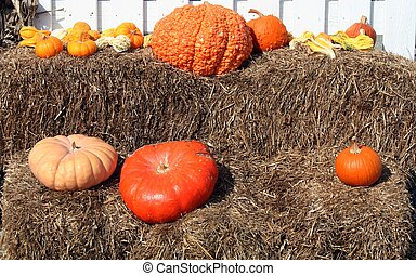 Pumpkin Gourds on hay display - Display of pumpkins and...