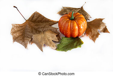 Pumpkin hallowen surrounded by dry autumn leaves