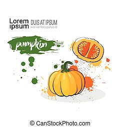 Pumpkin Hand Drawn Watercolor Vegetable On White Background With Copy Space
