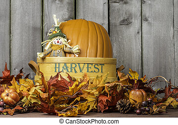 Pumpkin Harvest 2