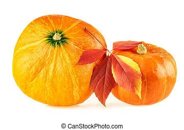 Pumpkin. Hokkaido pumpkins with fall leaf on white background
