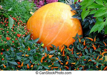 Pumpkin in the bush pepper