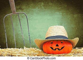Pumpkin in the farm.