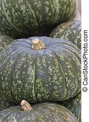 pumpkin in the store