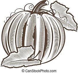 Pumpkin in vintage style. Line art vector illustration