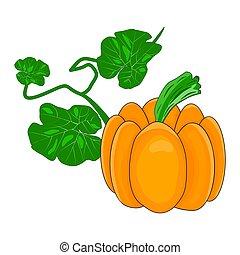 Pumpkin isolated on white background. Autumn orange squash, organic vegetable food.