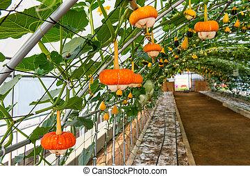 Pumpkin on a field.