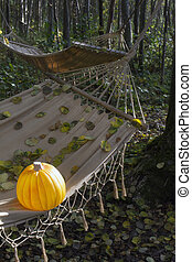 Pumpkin on a hammock