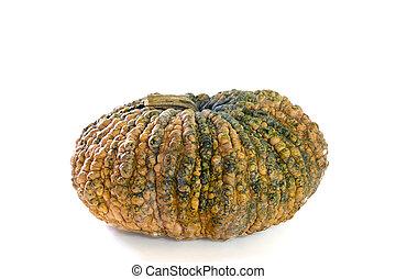 Pumpkin on a white background