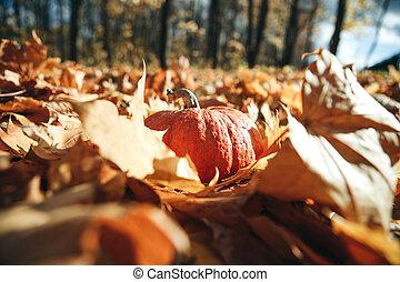 Pumpkin on autumn background