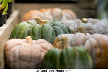 Pumpkin on display 1
