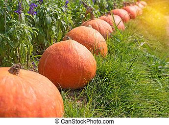pumpkin on green grass with flower background
