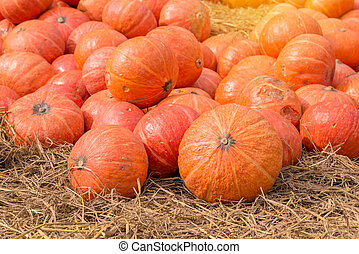 pumpkin on ground with dry straw.
